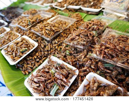 Edible fried insects on the kiosk of street food in Thailand