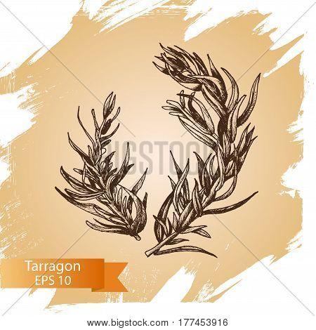 Vector Background Sketch Tarragon.
