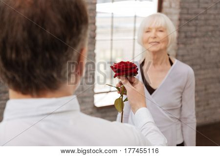Giving rose to the love of my life. Confident determined optimistic elderly man taking part in the art performance with senior woman in the dance studio while expressing love and holding rose