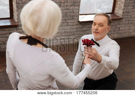 Symbol of my pure love. Handsome optimistic gallant elderly man taking part in the art performance with aged woman in the dance studio while expressing love and giving red rose