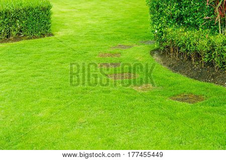 pathway in garden with a Freshly Mowed lawn, green garden, Landscaping in the garden