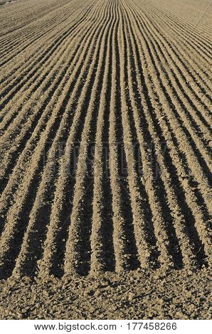 The parallel lines of a sow field