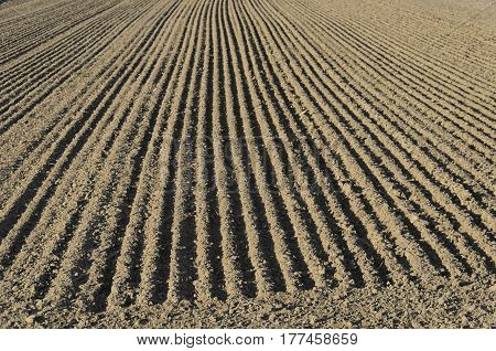 The parallel lines of a sown field