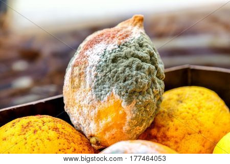 lemon mold citrus fruits moldy organic waste