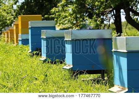 colour wooden beehives in the garden summer time