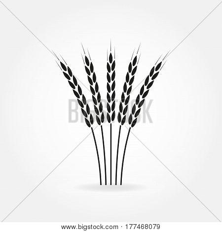Wheat ears or rice icon. Crop barley or rye symbol. Design element for beer label or bread packaging. Vector illustration.
