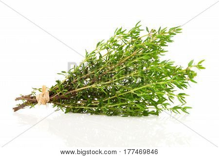bundle of fresh thyme on a white background