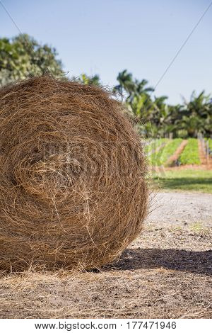 Rolls of haystack on the field. A sunny scenery with haystack in USA. Agriculture concept. Summer rural landscape.