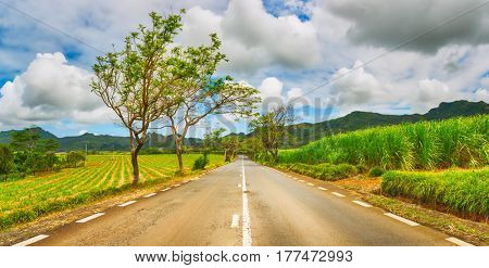 Trees in bloom and sugar cane plantations on a quite road among green hills landscape, Mauritius. Panorama