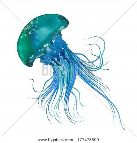 Blue jellyfish watercolor illustration on white background