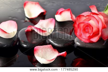 Spa stones and rose petals over black background. Spa concept.