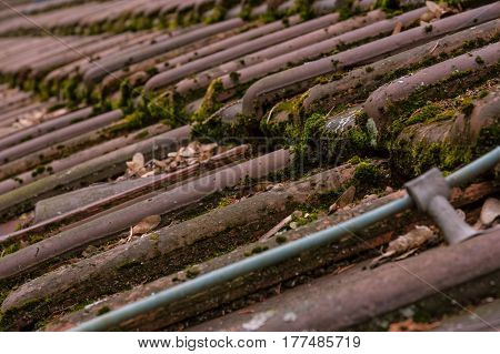 Clay Roof Shingles European German Moss Dirty Old Shed Top Closeup