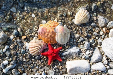 Red Sea star and sea shells at stone beach in the clean water. Travel vacation background
