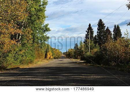 gravel road lined with trees on an autumn day
