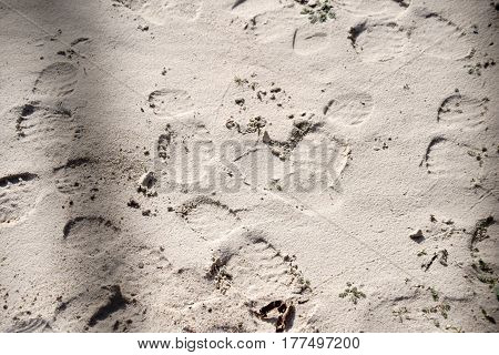 The footprints of the shoe soles of a boot in the sand.