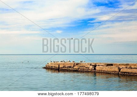 Group of seagulls sitting on breakwater. Sea landscape.