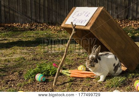 Trying to catch the Easter Bunny in the yard.