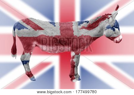 Brexit Result - Foolish Donkey In Front Of Union Jack Flag