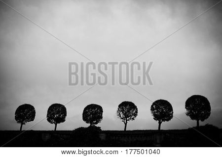 Panorama of crones of six identical trees against a cloudy sky background black and white