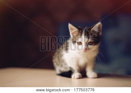 Portrait of little kitten sitting on the table and looking at the left copy space