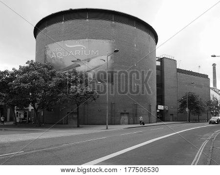 Bristol Aquarium In Bristol In Black And White