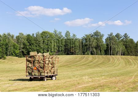 Old hay wagon full of freshly cut hay in a farm field. Upward with wheel marks leading to a tree line with copy space in sky if needed.