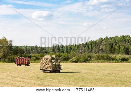Two hay wagons full of freshly cut hay in a farm field. Copy space in sky if needed.