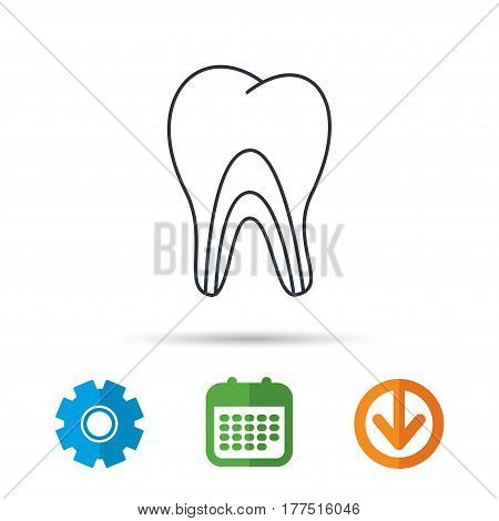 Dentinal tubules icon. Tooth medicine sign. Calendar, cogwheel and download arrow signs. Colored flat web icons. Vector
