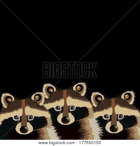 raccoon vector cute wild wildlife animal mammal