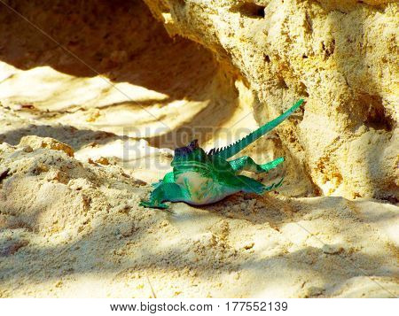 On a hot summer day a beautiful lizard basking on a stone