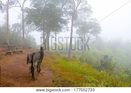 Foggy and tree on mountain winter at National park in countryside of Thailand