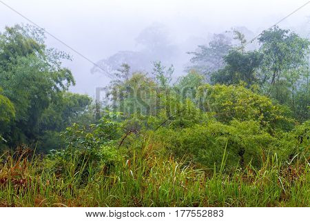 Foggy and green tree refresh after rain at National park in countryside of Thailand