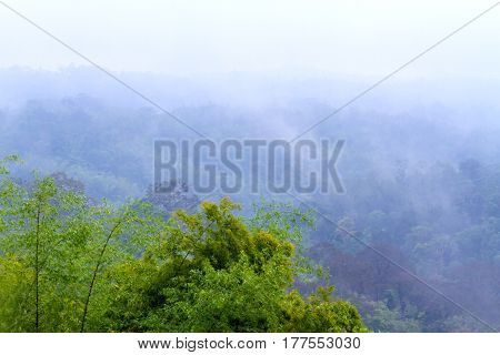 Green tree forest fresh with foggy after rain at National park in countryside of Thailand