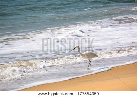 Single White Heron Catches A Fish On The Beach
