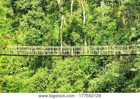 Beautiful Hanging Bridge Among Green Woods