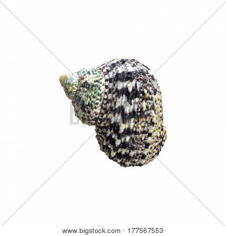 Nautilus shell section on white background. Sea shell
