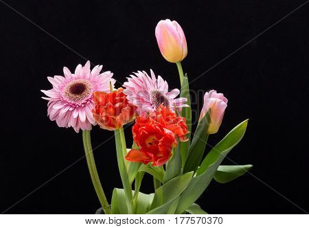 colorful bouquet of fresh spring tulips and gerbera flowers