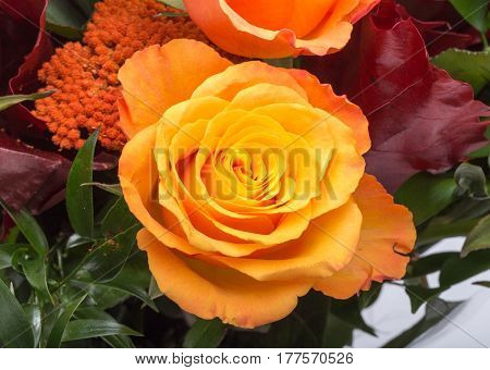 Close up of beautiful bouquet of orange roses