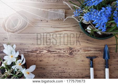 Copy Space For Advertisement Or Free Text. Sunny Spring Flowers Like Grape Hyacinth And Crocus. Gardening Tools Like Rake And Shovel. Hemp Fabric Ribbon. Aged Wooden Background