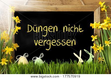 Blackboard With German Text Duengen Nicht Vergessen Means Do Not Forget To Dung. Sunny Spring Flowers Narcissus Or Daffodil With Grass, Easter Egg And Bunny. Rustic Aged Wooden Background.