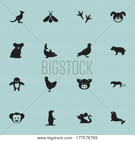 Set Of 16 Editable Animal Icons. Includes Symbols Such As Australian Bear, Penguin, Rat And More. Can Be Used For Web, Mobile, UI And Infographic Design.