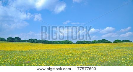 Springtime on Usedom Island at baltic Sea,Mecklenburg western Pomerania,Germany