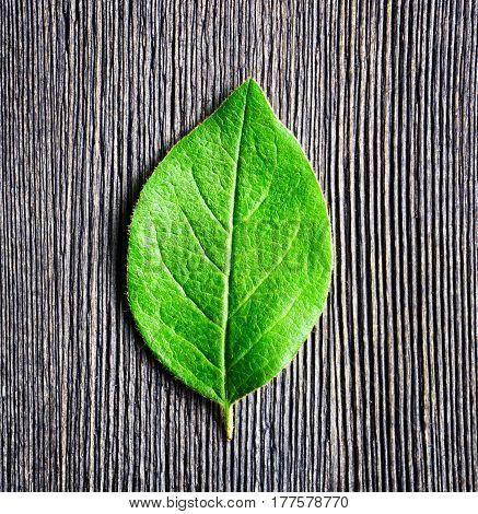 Green Leaf Lying On Wooden Board