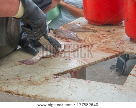 Fish gutted by a fisherman in a port