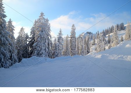 many snow covered trees in beautiful nature landscape