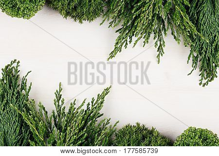 Young green conifer branches with copy space on white wooden table background.