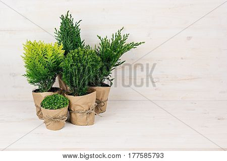 Composition of different young green conifer plants in pots with copy space on beige wooden table.