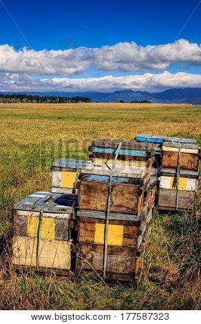 colored beehive farm boxes summer landscape image