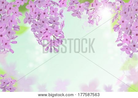 Spring background with pink and purple flowers of lilac. Can be used for background, wallpaper, greeting card web banner.