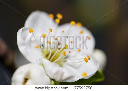 spring white flowers on a tree branch. spring time